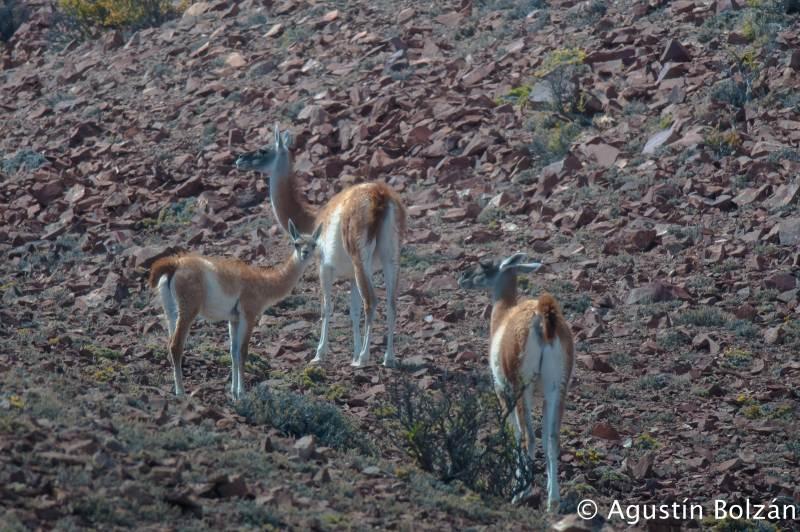 patagonia2011-1454.jpg