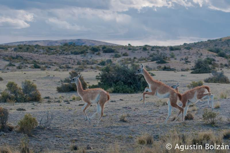 patagonia2011-1793.jpg